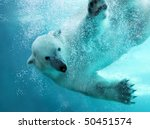 Polar Bear Attacking Underwate...