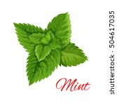 mint emblem. vector isolated... | Shutterstock .eps vector #504617035
