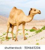 In Oman Empty Quarter Of Deser...