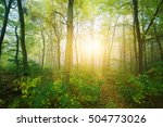 forest on a sunny day | Shutterstock . vector #504773026