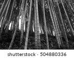 bamboo | Shutterstock . vector #504880336