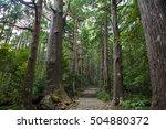 forest   Shutterstock . vector #504880372