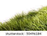 Tall Green Grass Blowing In Th...
