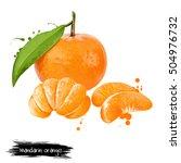 mandarin  tangerine citrus... | Shutterstock . vector #504976732