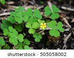 a gather of three leaf clover... | Shutterstock . vector #505058002
