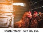chicken at hen house from...   Shutterstock . vector #505102156