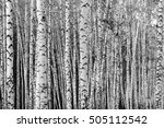 birch forest background  black... | Shutterstock . vector #505112542