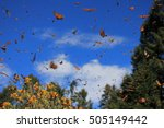 Monarch Butterflies In...