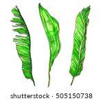 green tropical exotic... | Shutterstock . vector #505150738