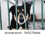 Adoption  Pets  Sad Animals...