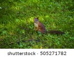 Young Eastern Fox Squirrel In...