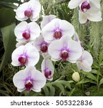 Orchids Are Another Plant...