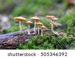 magic mushrooms | Shutterstock . vector #505346392
