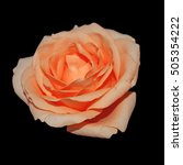 Orange Rose Isolated On A Blac...