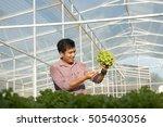 senior man planting organic... | Shutterstock . vector #505403056