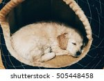 Stock photo brown puppy sleeping inside plush bed 505448458