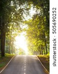 forest road trees along at the... | Shutterstock . vector #505690252