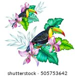 toucan and tropical flowers.... | Shutterstock . vector #505753642