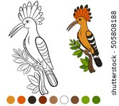Color Me  Hoopoe. Cute...