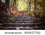 A Steps In Golden Autumn Fores...