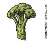 broccoli. vector engraving... | Shutterstock .eps vector #505967626