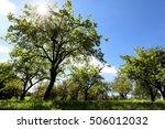 Beautiful Trees In The Sun