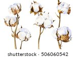 cotton plant | Shutterstock . vector #506060542