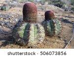 cactus plants in brazilian park.... | Shutterstock . vector #506073856