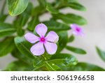 soft focus of pink flower and... | Shutterstock . vector #506196658