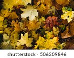 fallen leaves of the autumn... | Shutterstock . vector #506209846