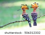 Common Hoopoe Or Eurasian...