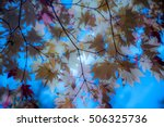 autumn leaves background   moon ... | Shutterstock . vector #506325736
