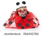 English Bulldog Wearing Ladybu...