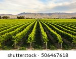 row of beautiful grape yard... | Shutterstock . vector #506467618
