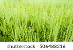 sprout of  a new life | Shutterstock . vector #506488216
