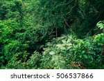 nature beauty of tropical... | Shutterstock . vector #506537866