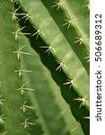 Cactus  Desert Plants ...