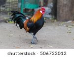 cock   rooster  symbol of new... | Shutterstock . vector #506722012