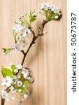 background wood spring flower | Shutterstock . vector #50673787