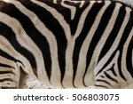 Background Zebra. Detail Of...