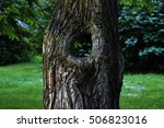 A Tree With A Through Hole ...