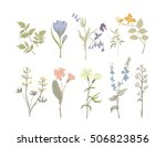 vintage wildflowers. botanical... | Shutterstock .eps vector #506823856