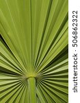 close up of palm frond | Shutterstock . vector #506862322