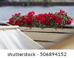 Red Begonia Plants With A...