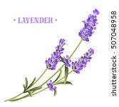 bunch of lavender flowers on a... | Shutterstock .eps vector #507048958
