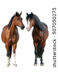 Stock photo two horse standing isolated on white background 507050275