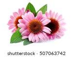 Echinacea Flowers Close Up...