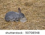 Cute And Funny Single Rabbit...