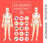 human anatomy. man and woman... | Shutterstock .eps vector #507107476