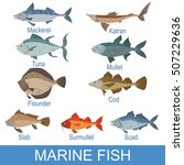 marine fish identification... | Shutterstock .eps vector #507229636